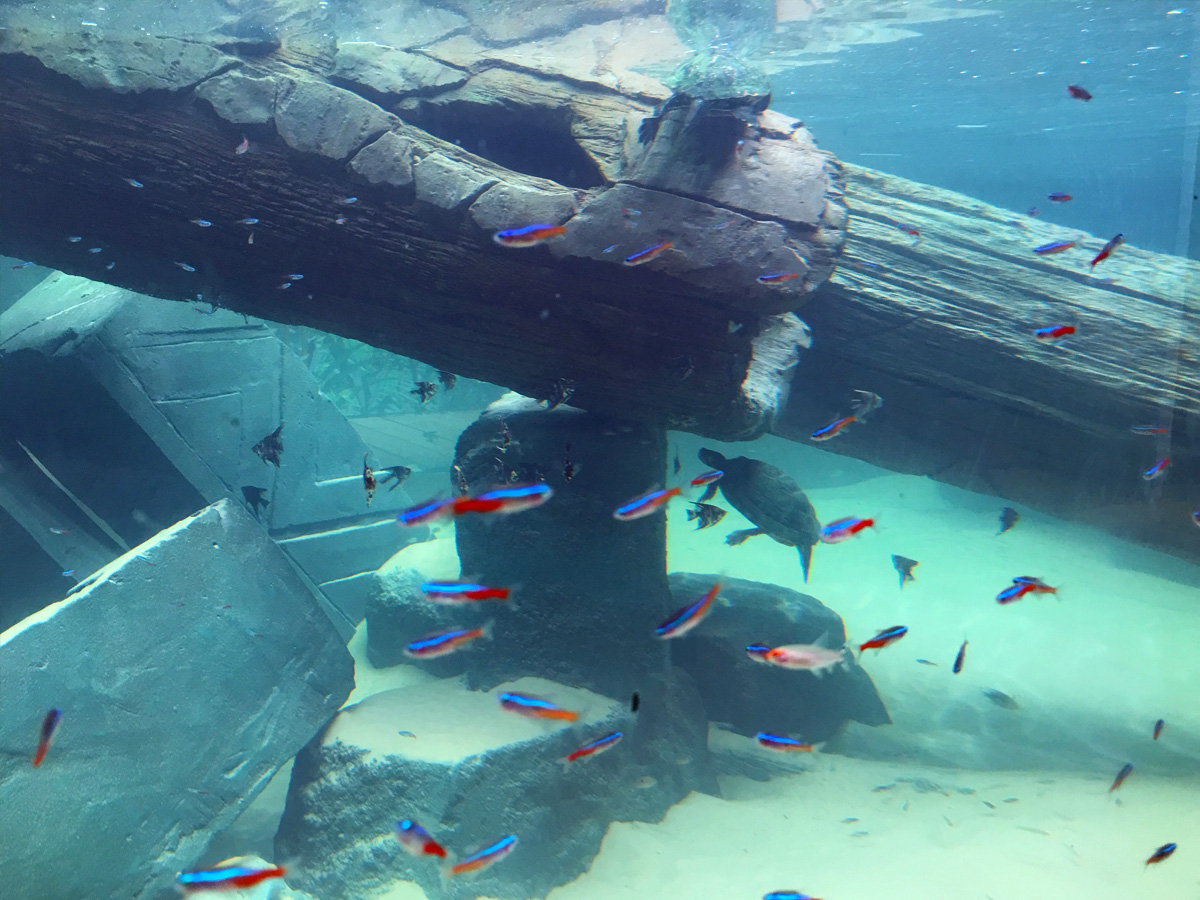 aquarium theming of wreck with turtle and fish swimming
