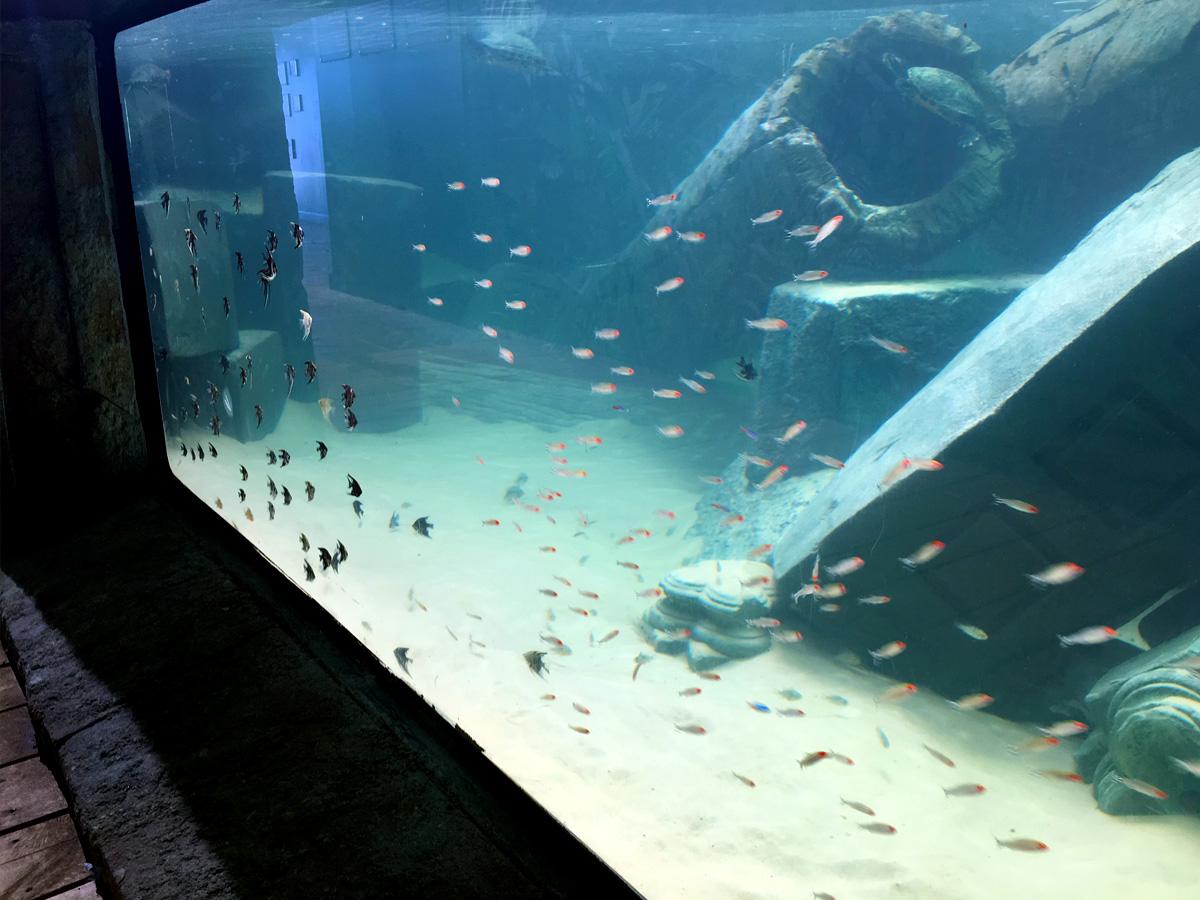 Underwater aquarium theming